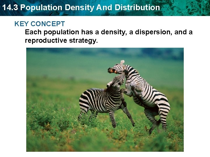 14. 3 Population Density And Distribution KEY CONCEPT Each population has a density, a