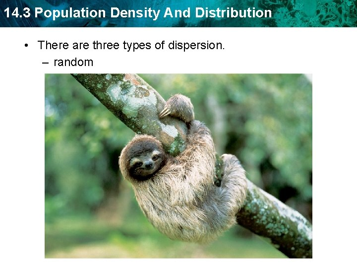 14. 3 Population Density And Distribution • There are three types of dispersion. –