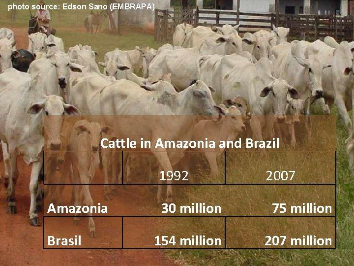 photo source: Edson Sano (EMBRAPA) Cattle in Amazonia and Brazil 1992 Amazonia Brasil 2007
