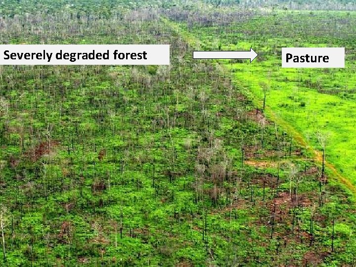 Severely degraded forest Pasture
