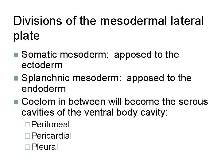 Divisions of the mesodermal lateral plate Somatic mesoderm: apposed to the ectoderm n Splanchnic