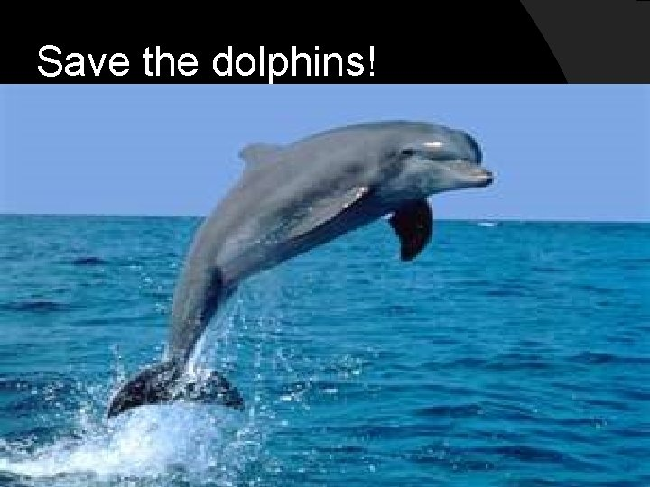 Save the dolphins!