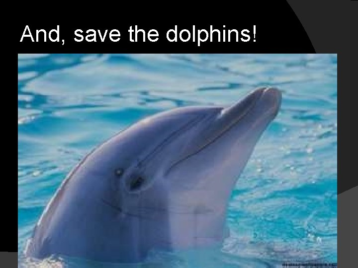 And, save the dolphins!