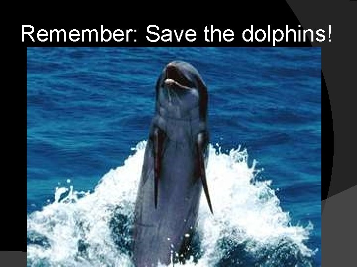 Remember: Save the dolphins!