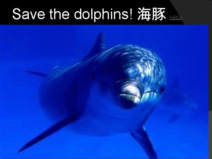 Save the dolphins! 海豚 hǎitún