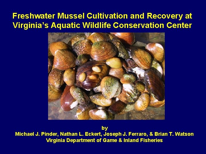 Freshwater Mussel Cultivation and Recovery at Virginia's Aquatic Wildlife Conservation Center by Michael J.