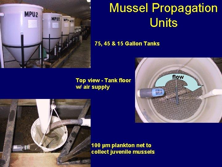 Mussel Propagation Units 75, 45 & 15 Gallon Tanks Top view - Tank floor