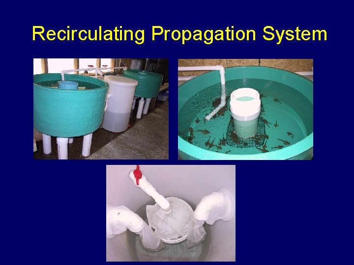 Recirculating Propagation System