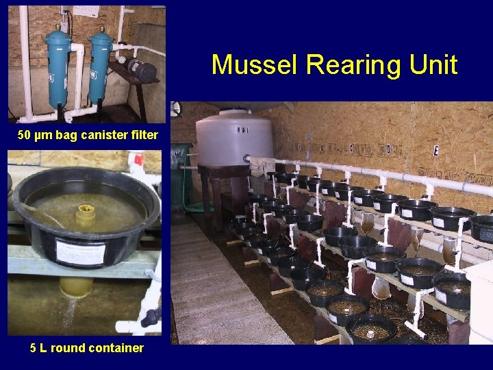 Mussel Rearing Unit 50 µm bag canister filter 5 L round container
