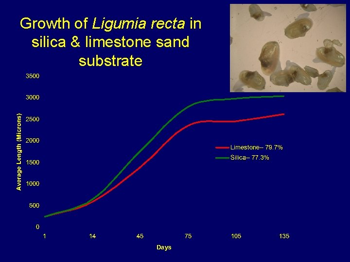Growth of Ligumia recta in silica & limestone sand substrate