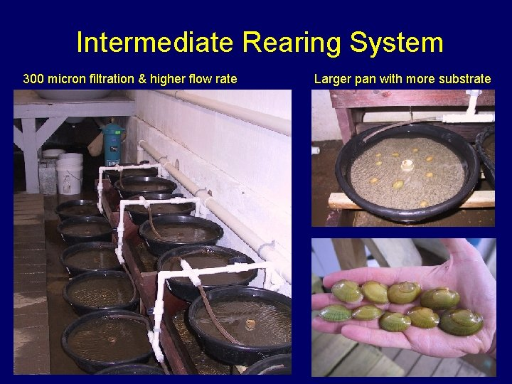 Intermediate Rearing System 300 micron filtration & higher flow rate Larger pan with more