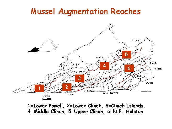 Mussel Augmentation Reaches TAZEWELL . h. R c Clin WISE 5 R. RUSSEL Little