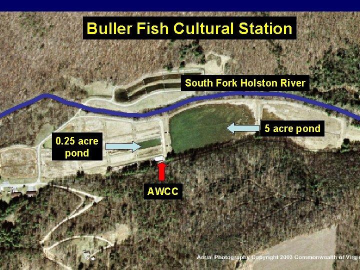 Buller Fish Cultural Station South Fork Holston River 5 acre pond 0. 25 acre