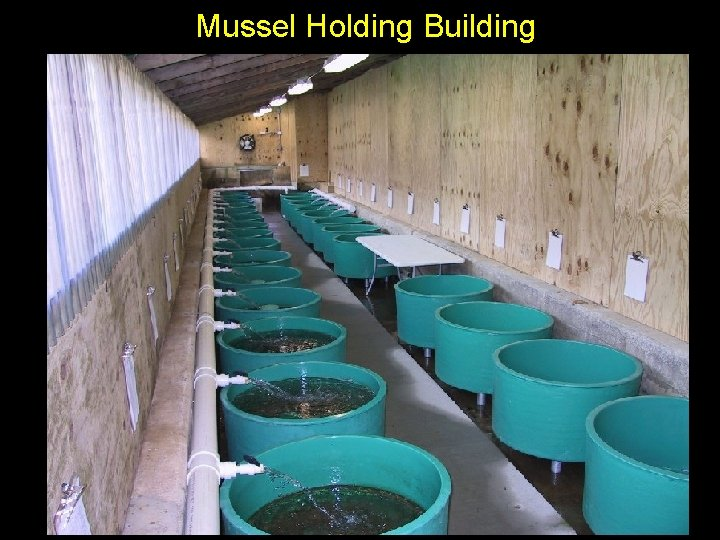 Mussel Holding Building