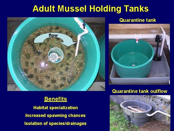 Adult Mussel Holding Tanks Quarantine tank flow Quarantine tank outflow Benefits Habitat specialization Increased
