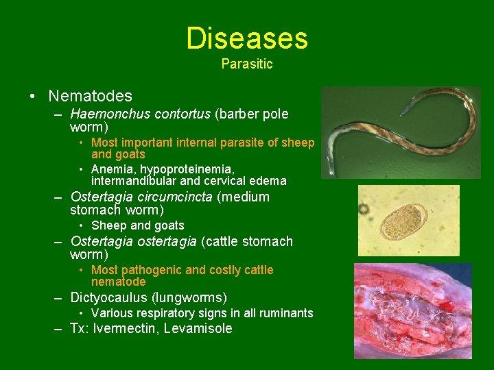 Diseases Parasitic • Nematodes – Haemonchus contortus (barber pole worm) • Most important internal