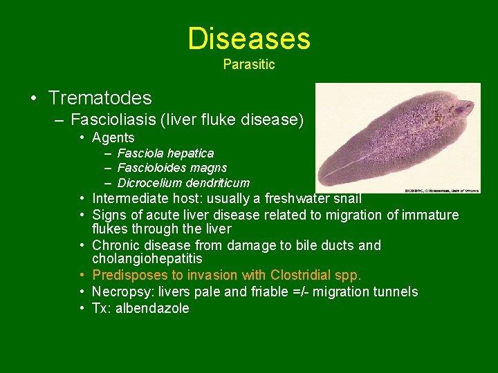 Diseases Parasitic • Trematodes – Fascioliasis (liver fluke disease) • Agents – Fasciola hepatica