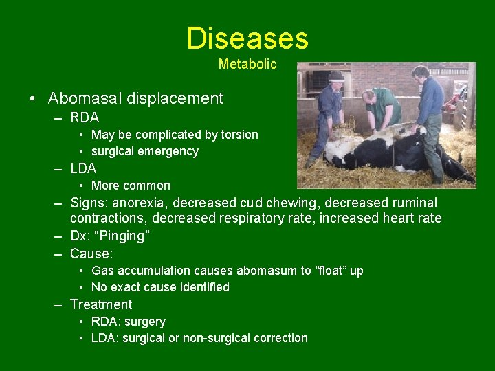 Diseases Metabolic • Abomasal displacement – RDA • May be complicated by torsion •