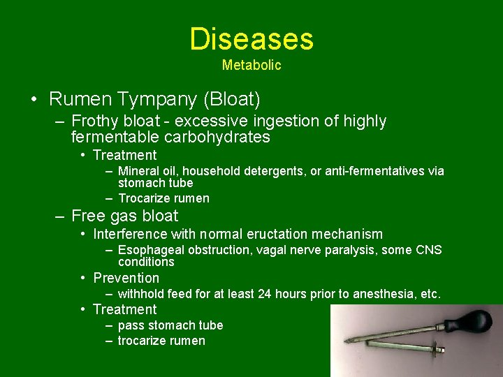 Diseases Metabolic • Rumen Tympany (Bloat) – Frothy bloat - excessive ingestion of highly