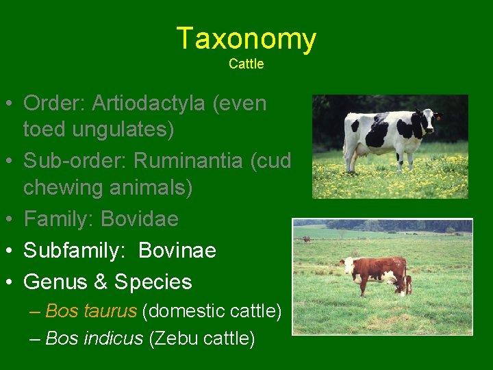 Taxonomy Cattle • Order: Artiodactyla (even toed ungulates) • Sub-order: Ruminantia (cud chewing animals)