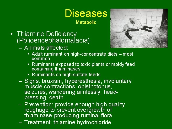 Diseases Metabolic • Thiamine Deficiency (Polioencephalomalacia) – Animals affected: • Adult ruminant on high-concentrate