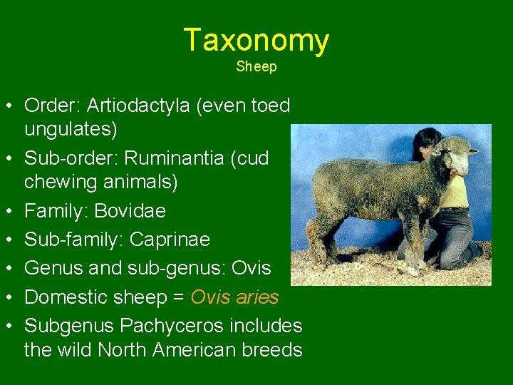 Taxonomy Sheep • Order: Artiodactyla (even toed ungulates) • Sub-order: Ruminantia (cud chewing animals)