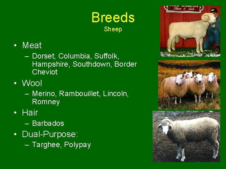 Breeds Sheep • Meat – Dorset, Columbia, Suffolk, Hampshire, Southdown, Border Cheviot • Wool