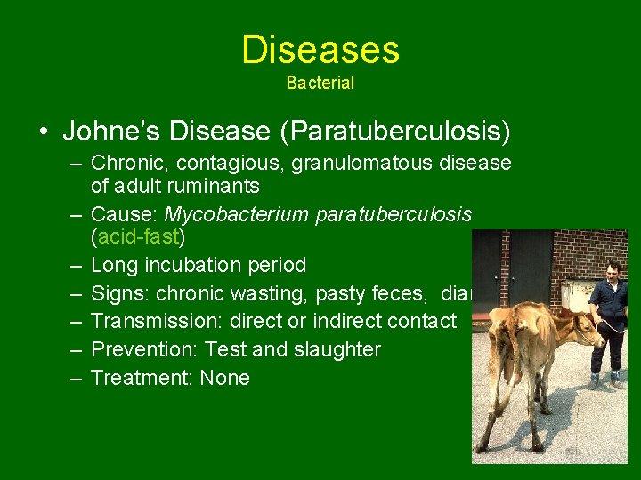 Diseases Bacterial • Johne's Disease (Paratuberculosis) – Chronic, contagious, granulomatous disease of adult ruminants