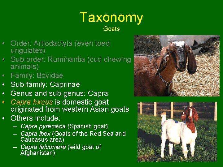 Taxonomy Goats • Order: Artiodactyla (even toed ungulates) • Sub-order: Ruminantia (cud chewing animals)