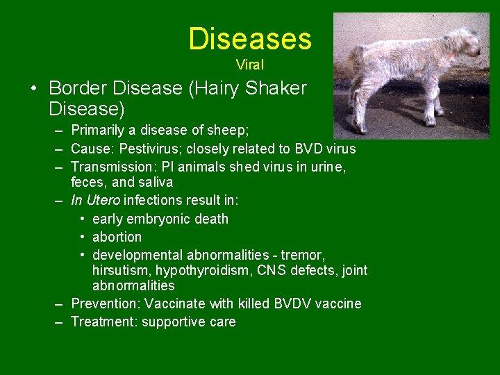 Diseases Viral • Border Disease (Hairy Shaker Disease) – Primarily a disease of sheep;