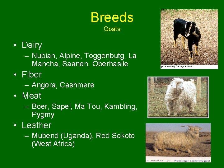 Breeds Goats • Dairy – Nubian, Alpine, Toggenbutg, La Mancha, Saanen, Oberhaslie • Fiber
