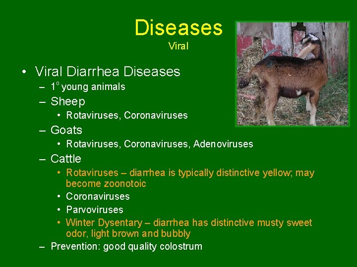 Diseases Viral • Viral Diarrhea Diseases – 1 o young animals – Sheep •