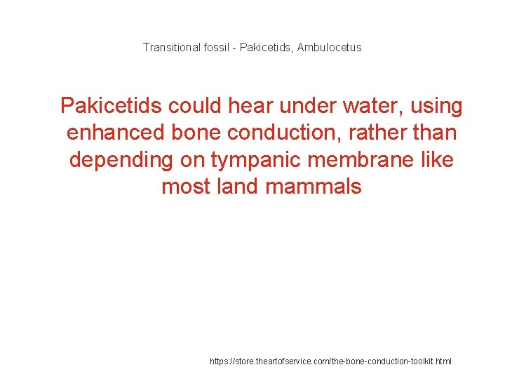Transitional fossil - Pakicetids, Ambulocetus 1 Pakicetids could hear under water, using enhanced bone