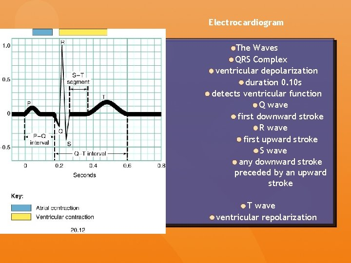 Electrocardiogram The Waves QRS Complex ventricular depolarization duration 0. 10 s detects ventricular function