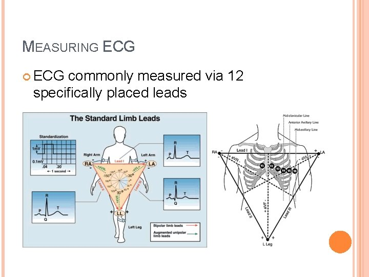 MEASURING ECG commonly measured via 12 specifically placed leads