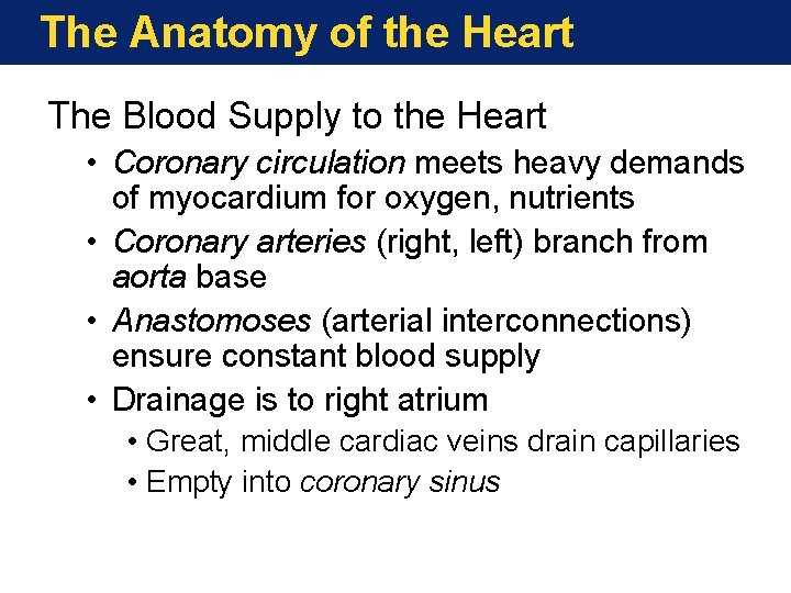 The Anatomy of the Heart The Blood Supply to the Heart • Coronary circulation