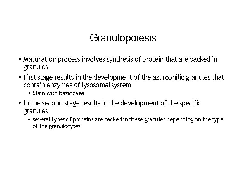 Granulopoiesis • Maturation process involves synthesis of protein that are backed in granules •