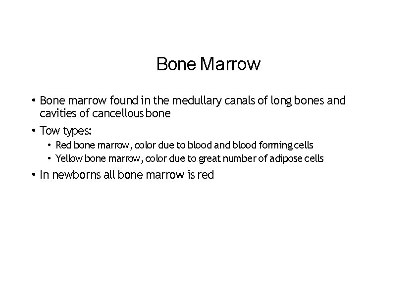 Bone Marrow • Bone marrow found in the medullary canals of long bones and