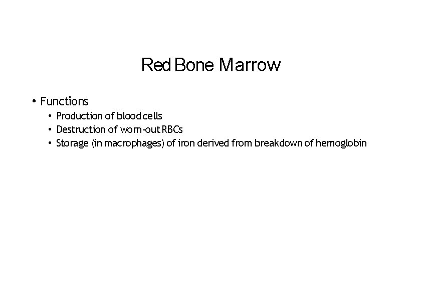 Red Bone Marrow • Functions • Production of blood cells • Destruction of worn‐out