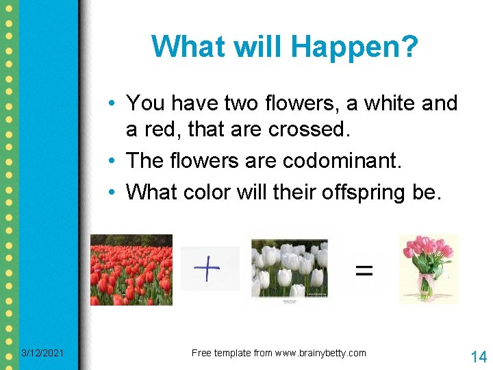 What will Happen? • You have two flowers, a white and a red, that