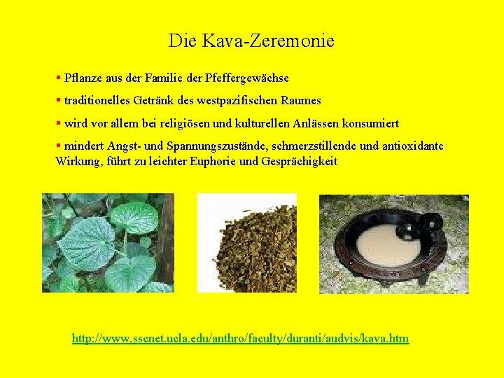 Die Kava-Zeremonie § Pflanze aus der Familie der Pfeffergewächse § traditionelles Getränk des westpazifischen