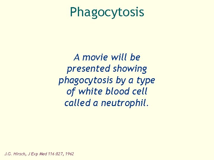 Phagocytosis A movie will be presented showing phagocytosis by a type of white blood