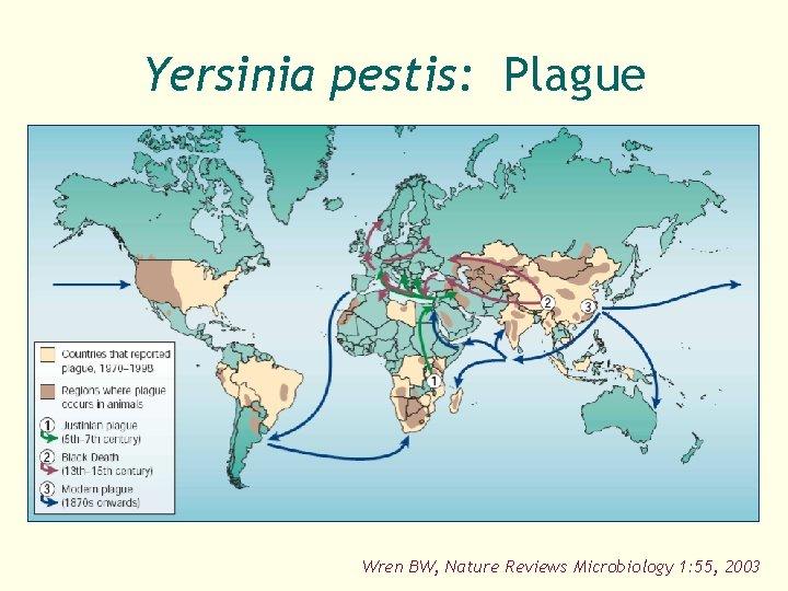 Yersinia pestis: Plague Wren BW, Nature Reviews Microbiology 1: 55, 2003