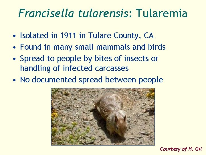 Francisella tularensis: Tularemia • Isolated in 1911 in Tulare County, CA • Found in