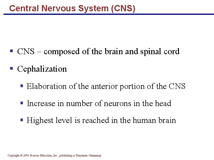 Central Nervous System (CNS) § CNS – composed of the brain and spinal cord