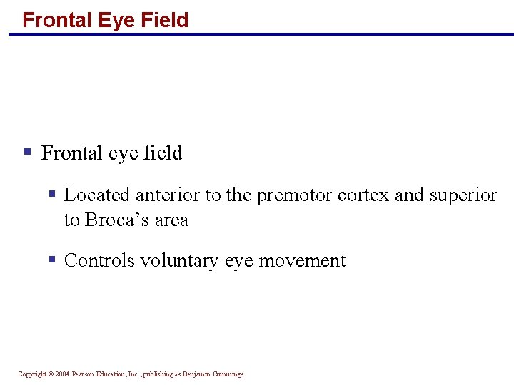 Frontal Eye Field § Frontal eye field § Located anterior to the premotor cortex