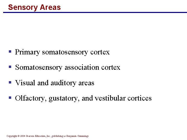 Sensory Areas § Primary somatosensory cortex § Somatosensory association cortex § Visual and auditory