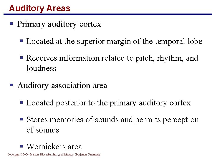 Auditory Areas § Primary auditory cortex § Located at the superior margin of the