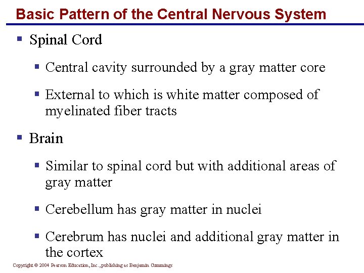 Basic Pattern of the Central Nervous System § Spinal Cord § Central cavity surrounded