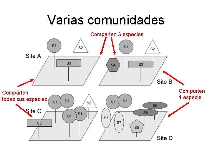 Varias comunidades Comparten 3 especies Comparten todas sus especies Comparten 1 especie